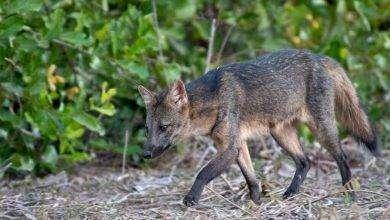 Photo of بماذا تشتهر البرازيل في الحيوانات