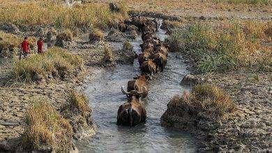 Photo of بماذا تشتهر العراق في الحيوانات