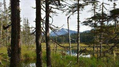 Photo of بماذا تشتهر ولاية ألاسكا الأمريكية في الصناعة والتجارة