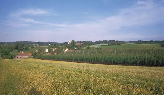 بماذا تشتهر ألمانيا في الزراعة