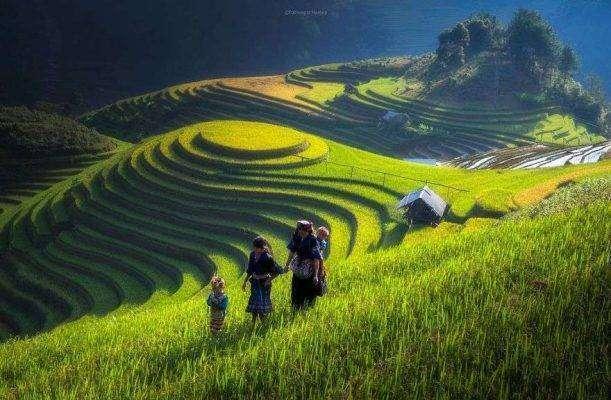 بماذا تشتهر الصين في الزراعة