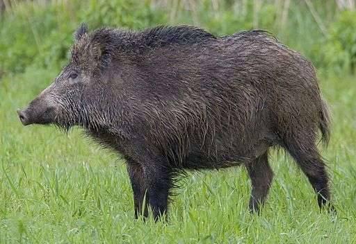 بماذا تشتهر بولندا في الحيوانات