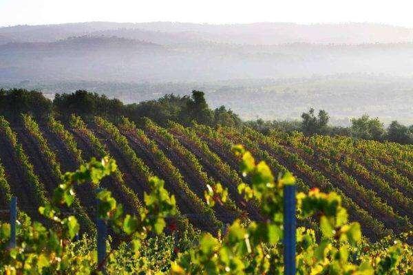 قطاع الزراعة في البرتغال