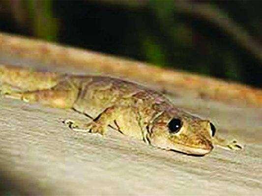 بماذا تشتهر سلطنة عمان في الحيوانات
