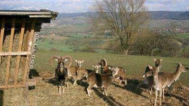 Photo of بماذا تشتهر قبرص في الحيوانات
