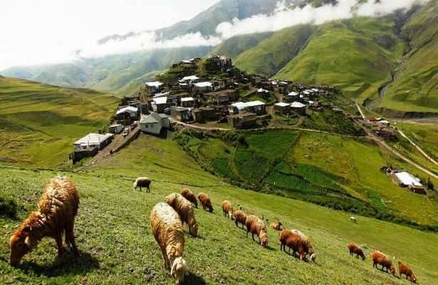 بماذا تشتهر أذربيجان فى الحيوانات