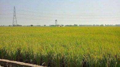 Photo of بماذا تشتهر الهند في الزراعة