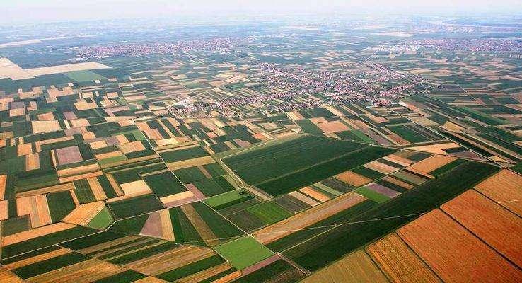 انتاج الفواكه في صربيا