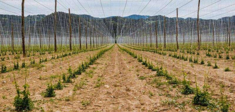 الانتاج الزراعي في سلوفينيا