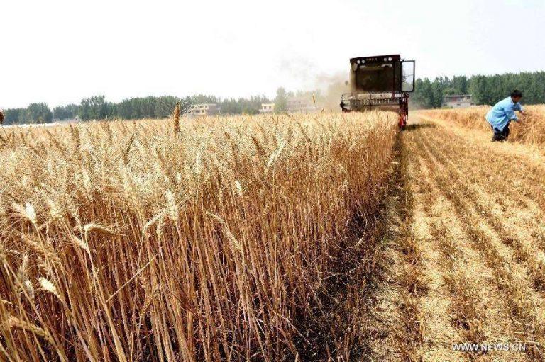 بماذا تشتهر التشيك في الزراعة