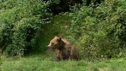 بماذا تشتهر رومانيا في الحيوانات