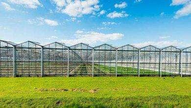 Photo of بماذا تشتهر صربيا في الزراعة