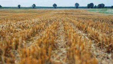 Photo of بماذا تشتهر رومانيا في الزراعة