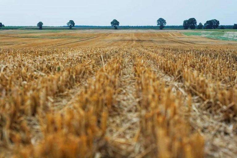 بماذا تشتهر رومانيا في الزراعة