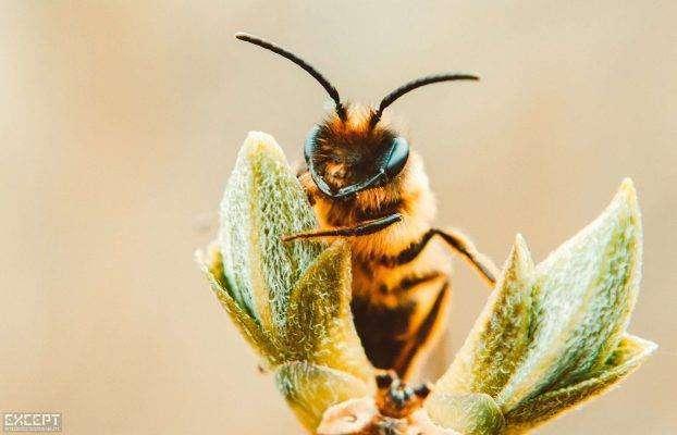 دور النحل في تلقيح النباتات
