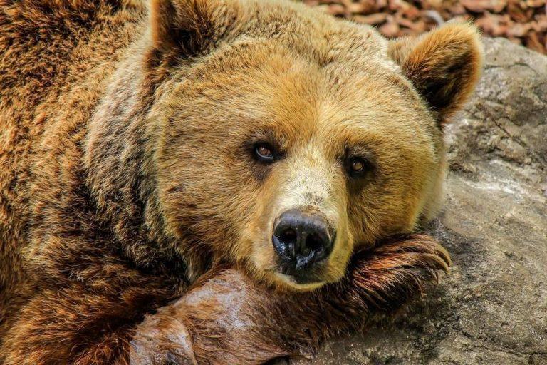 بماذا تشتهر بلغاريا في الحيوانات