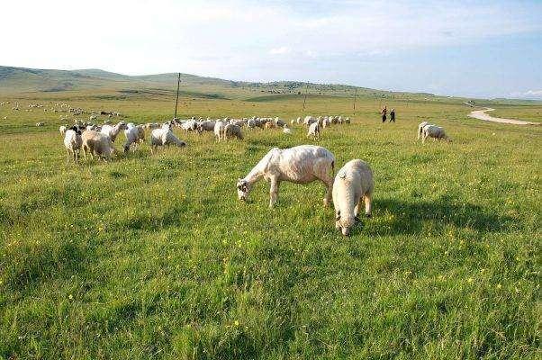 الثروة الحيوانية في صربيا