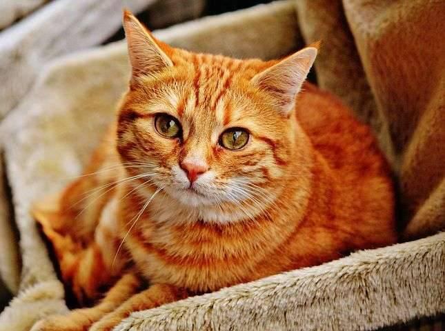 لماذا بيع القطط حرام