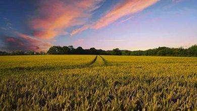 Photo of بماذا تشتهر الدنمارك في الزراعة