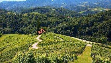 Photo of بماذا تشتهر سلوفينيا في الزراعة