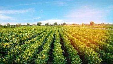 Photo of بماذا تشتهر تركيا في الزراعة