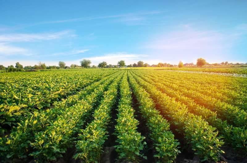 بماذا تشتهر تركيا في الزراعة
