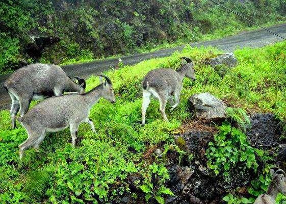 التعرف على الحياة البرية في المنتزه الوطني
