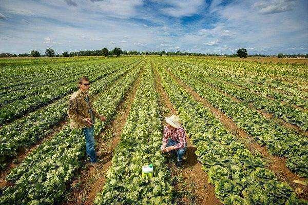 قطاع الزراعة في بولندا
