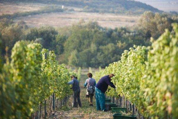 صادرات سلوفاكيا الزراعية