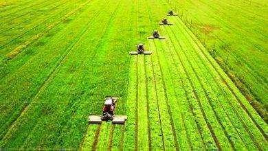 Photo of بماذا تشتهر السعودية في الزراعة