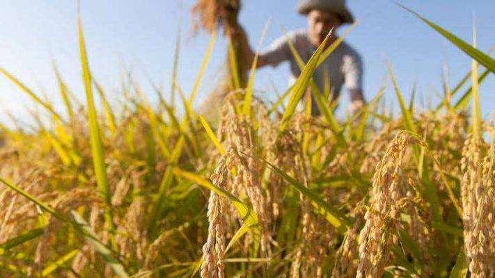 بماذا تشتهر المغرب في الزراعة