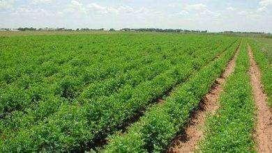 Photo of بماذا تشتهر باكستان في الزراعة