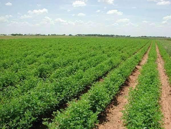 بماذا تشتهر باكستان في الزراعة