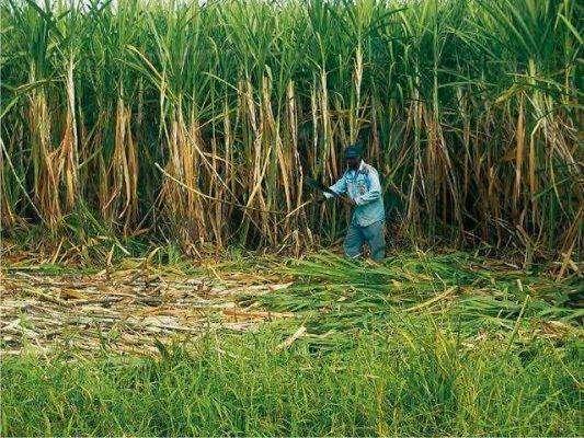 بماذا تشتهر مصر في الزراعة