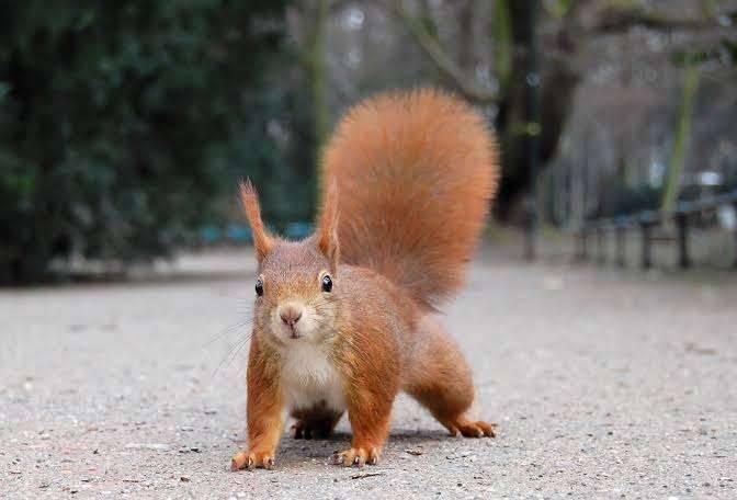 بماذا تشتهر الدنمارك في الحيوانات