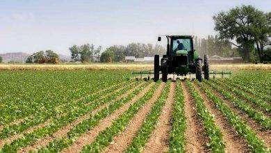 Photo of بماذا تشتهر المغرب في الزراعة