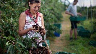 Photo of بماذا تشتهر التشيك في الزراعة