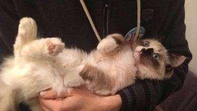 Photo of كيف تعرف نوع قطتك