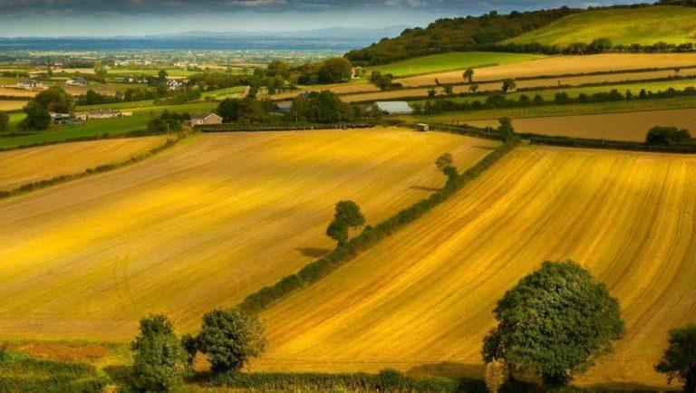 بماذا تشتهر البرتغال في الزراعة