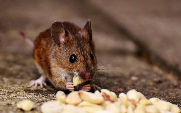 معلومات عن سم الفئران