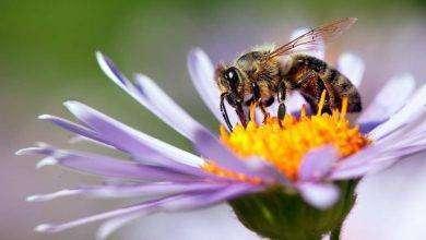 Photo of مقال عن النحل