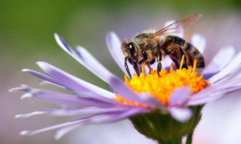 مقال عن النحل