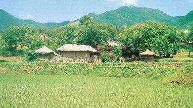 Photo of بماذا تشتهر كوريا الجنوبية في الزراعة