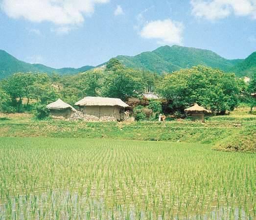 بماذا تشتهر كوريا الجنوبية في الزراعة