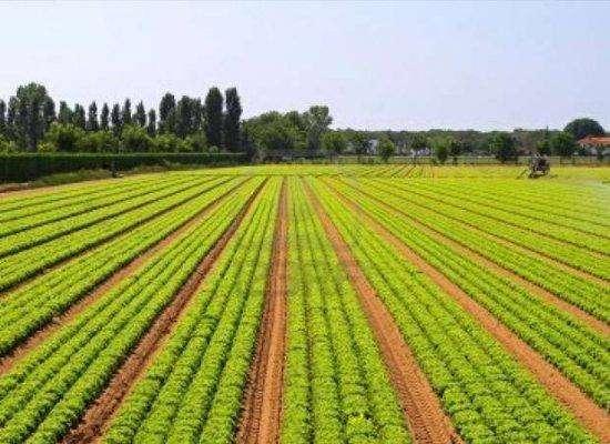 قطاع الزراعة في صربيا