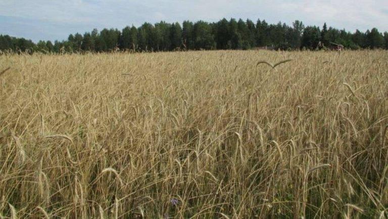 بماذا تشتهر فنلندا في الزراعة