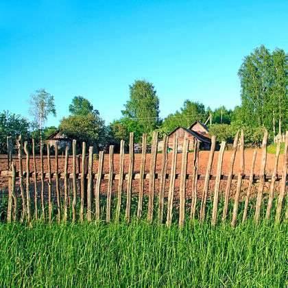 بماذا تشتهر روسيا في الزراعة