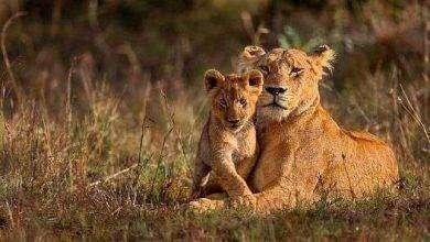 Photo of بماذا تشتهر جنوب افريقيا في الحيوانات