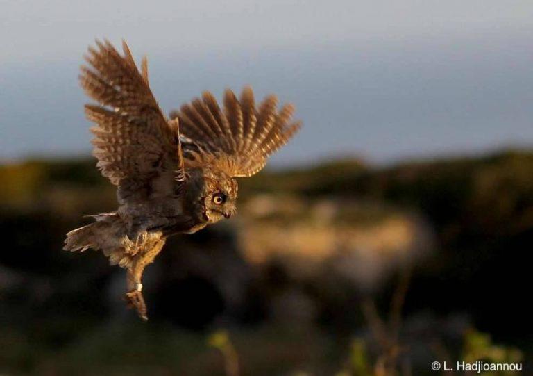 بماذا تشتهر قبرص في الحيوانات