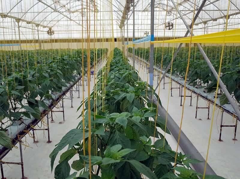 بماذا تشتهر البحرين في الزراعة